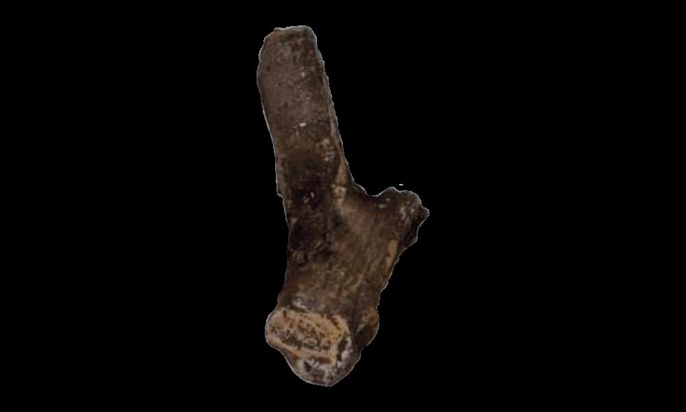 Wardenaar slijtvaste keramische stammetjes 20cm